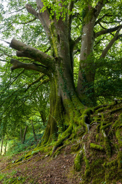 Forest in the Lydford Gorge Natural Reserve, Devon, UK stock photo
