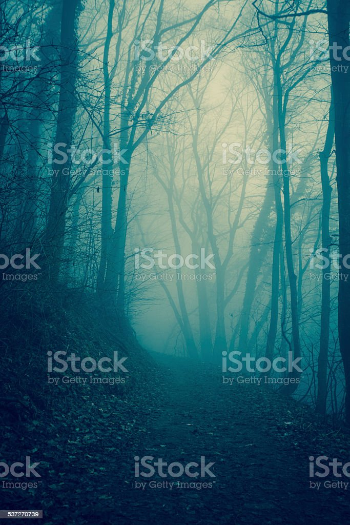 Forest in the mist stock photo