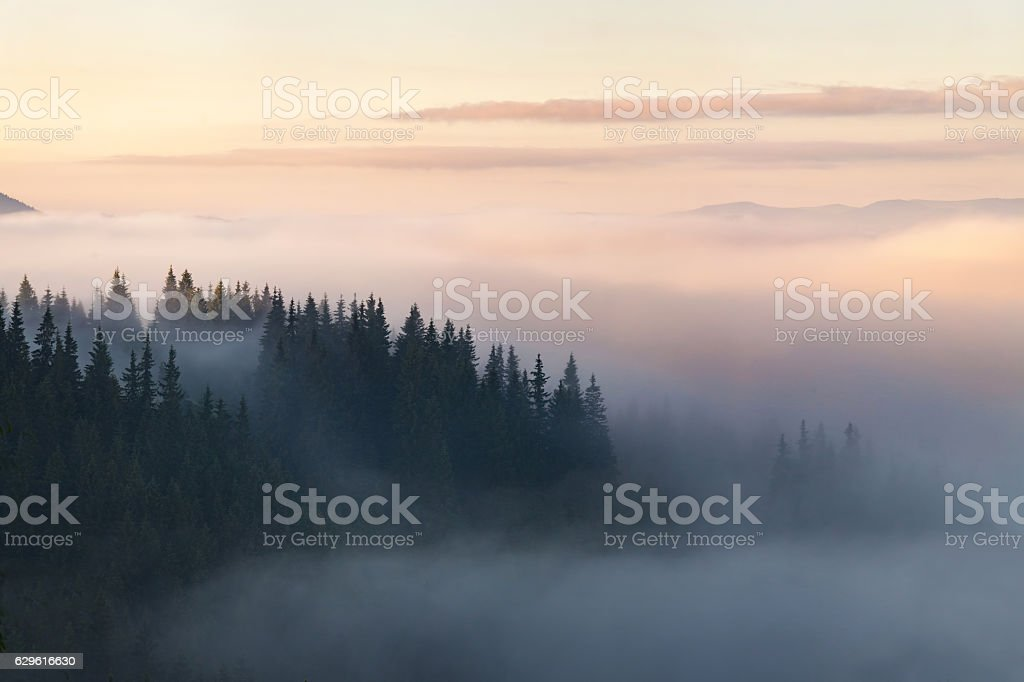 Forest in the mountains covered with fog foto de stock royalty-free