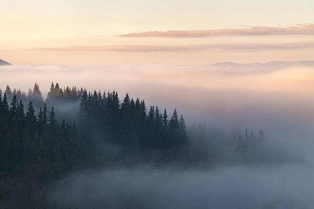 Forest in the mountains covered with fog stock photo