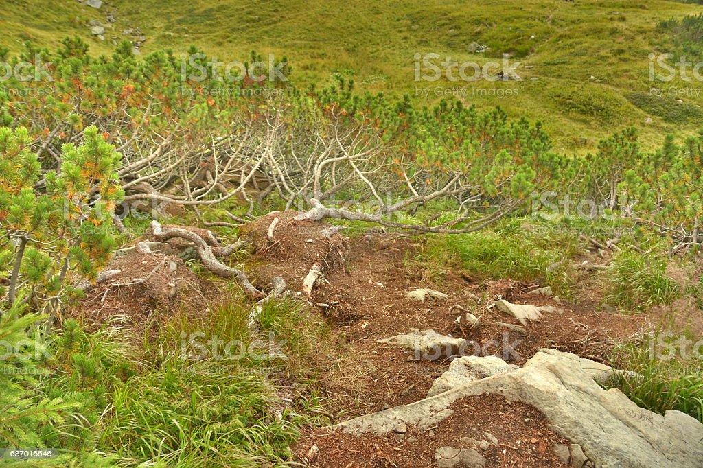 Лес в горах  стоковое фото