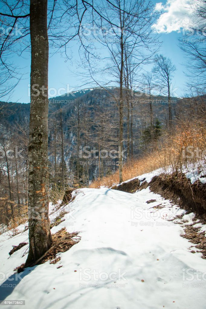 Forest in the mountains 免版稅 stock photo