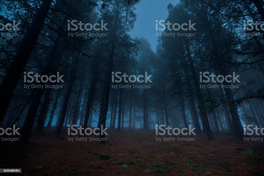 forest in the night time stock photo
