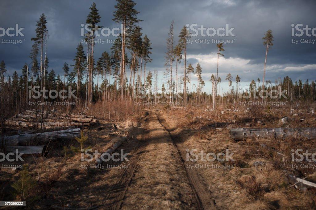 Forêt dans la neige un matin ensoleillé photo libre de droits