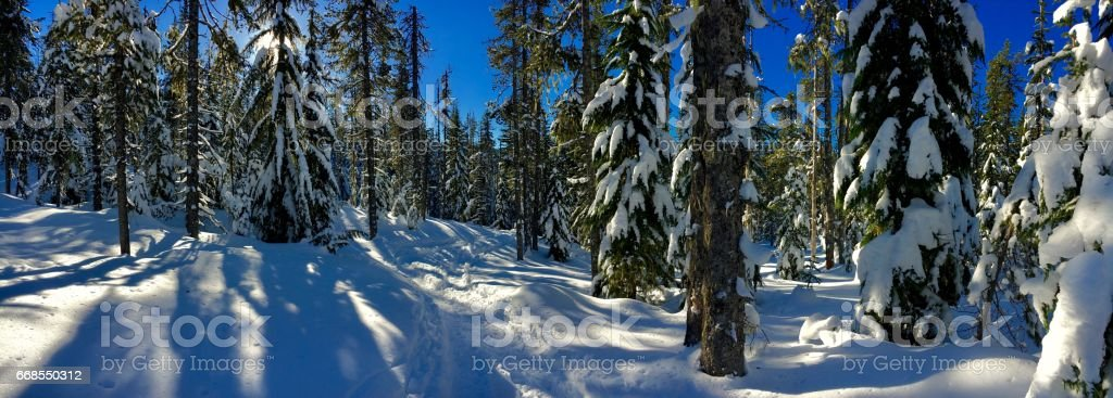 Forest in the Snow stock photo