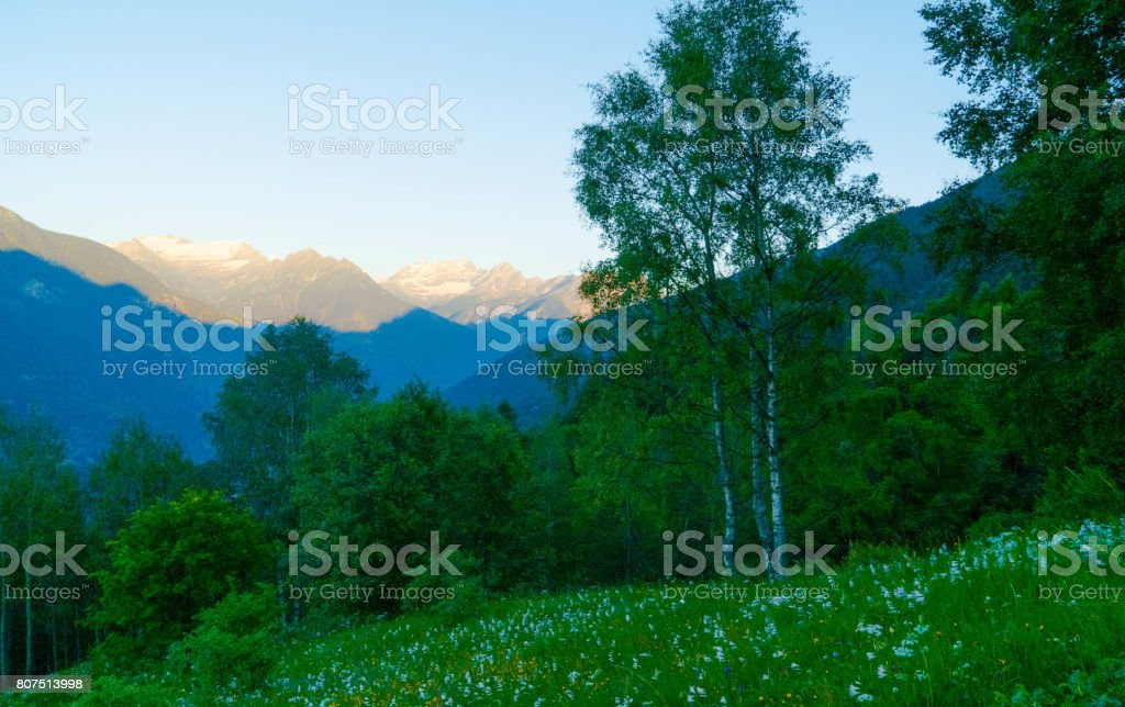 Forest in the Swiss mountains. stock photo