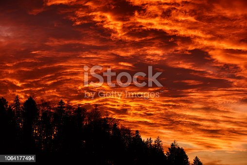 1013154212istockphoto forest in the twilight 1064177494