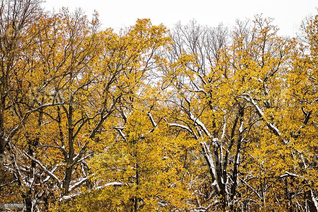 La forêt d'hiver photo libre de droits