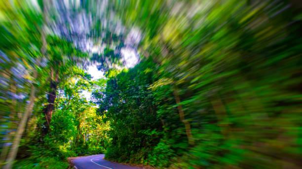 Wald in tropischem Klima – Foto