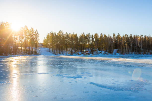 Forest in winter morning stock photo