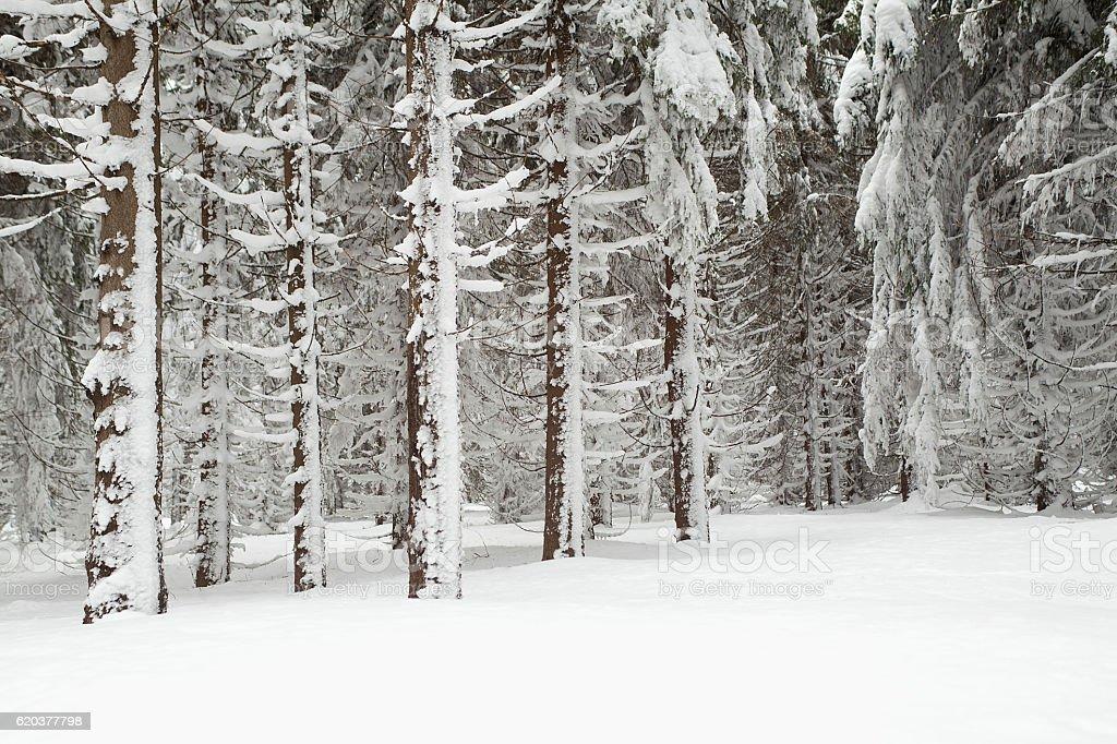 Floresta no Inverno foto de stock royalty-free