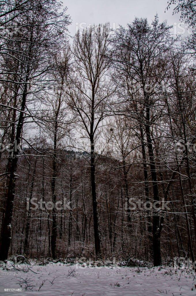 Kışın orman - Royalty-free Ağaç Stok görsel