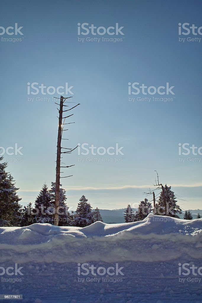 Foresta di inverno foto stock royalty-free