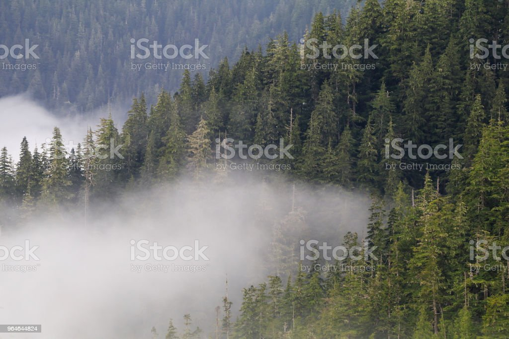 Forest Industry royalty-free stock photo