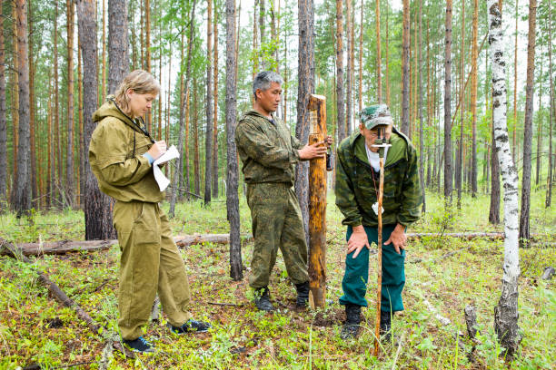 Forest inspectors work in the forest. Forestry inspector with a group of foresters marking out the plot for sanitary felling of the forest.Determination of the direction and marking of the site of sanitary felling of the forest with the help of the geodesic compass. forester stock pictures, royalty-free photos & images