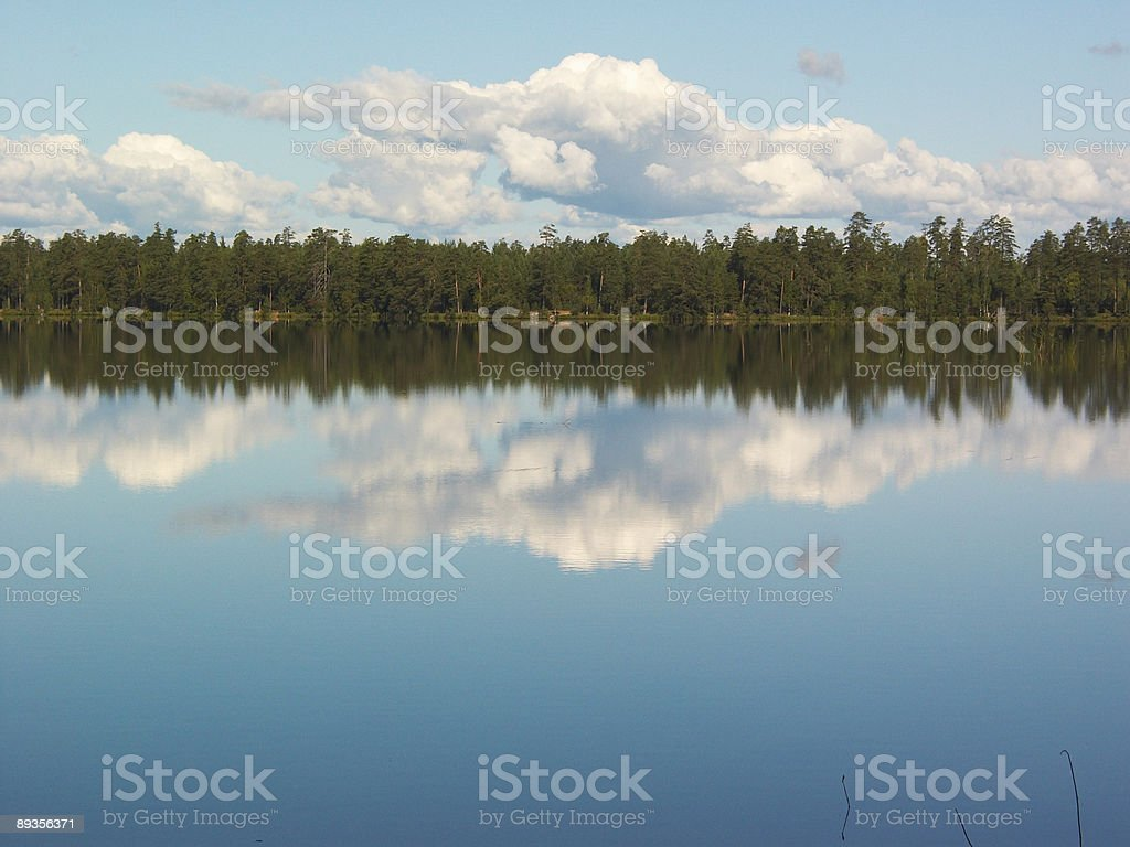 Forest lake mirror royaltyfri bildbanksbilder