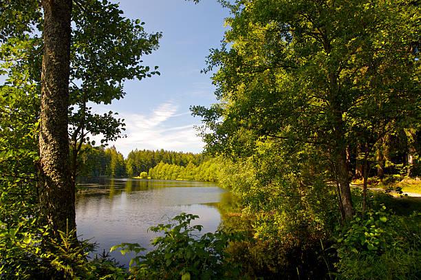 forest lake - bayerischer wald bildbanksfoton och bilder