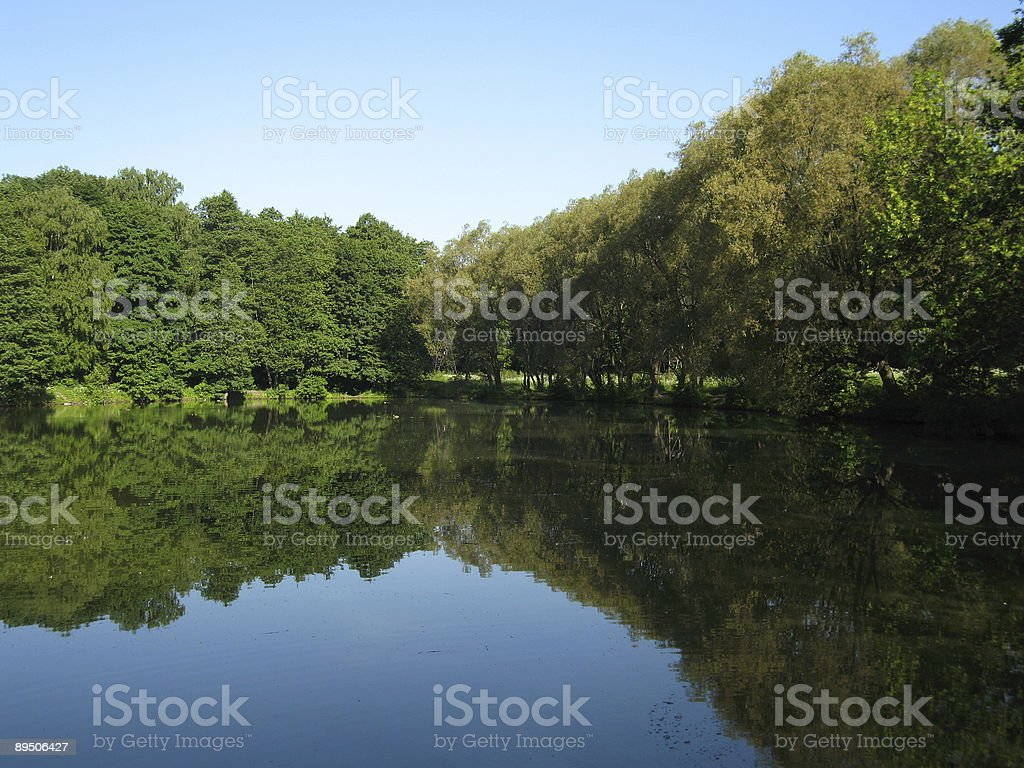 Forest lake. royalty-free stock photo