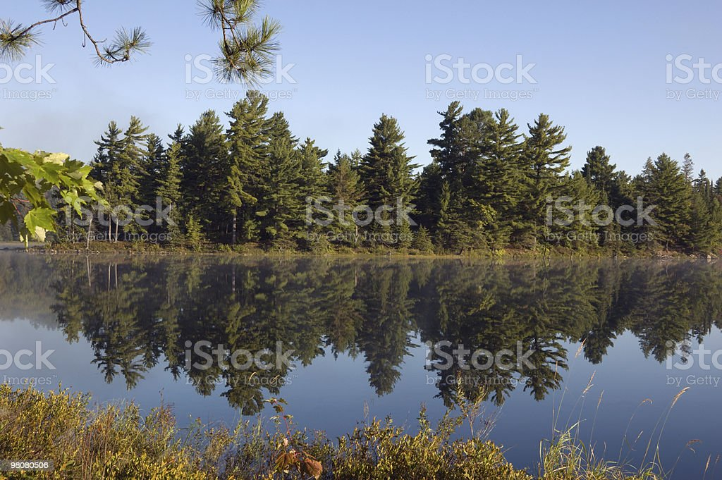 forest lake foto stock royalty-free