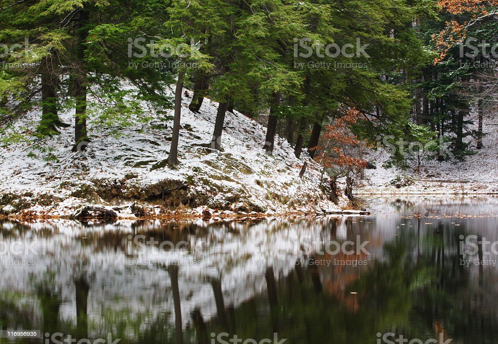 Forest Lake Reflection Winter Tranquility royalty-free stock photo