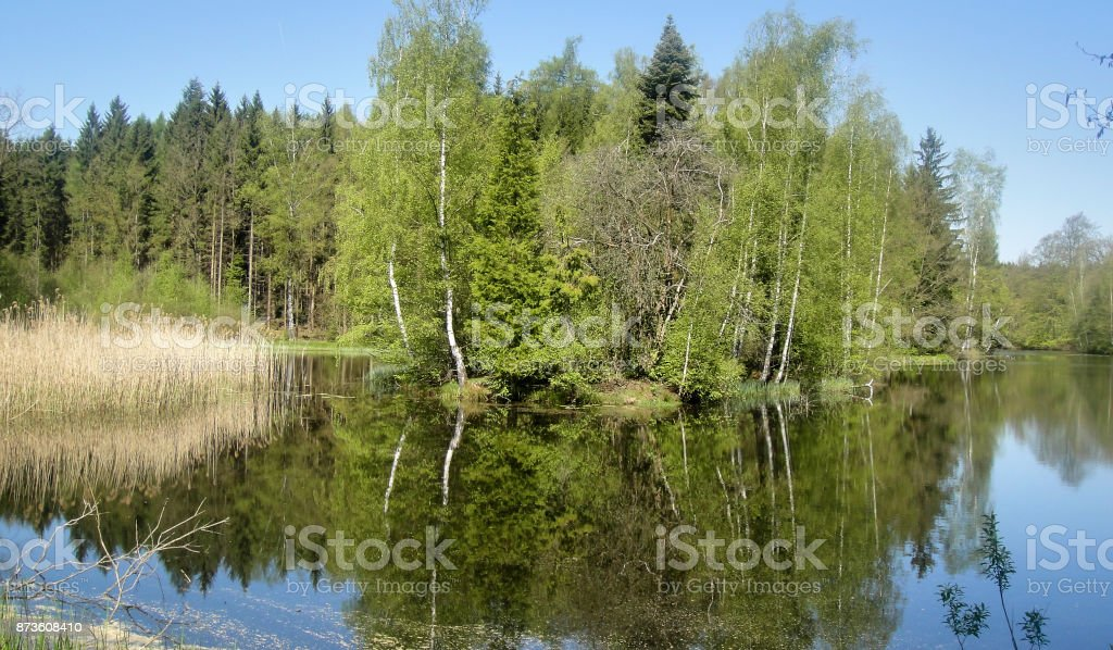 Forest Lake with reflection in the water stock photo