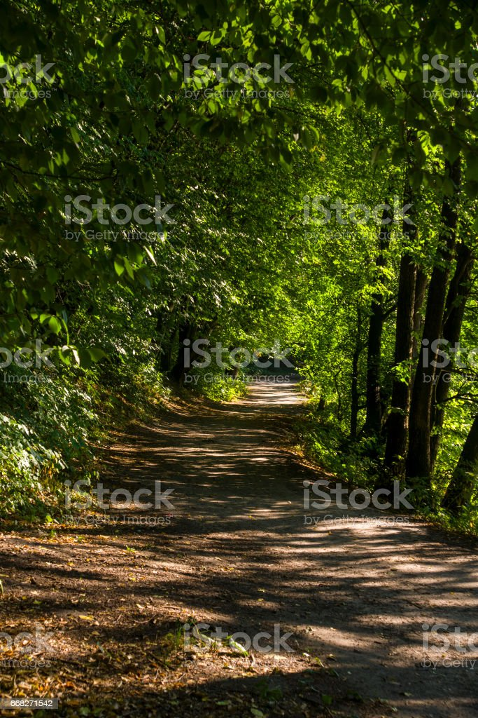 forest landscape in summer europe pine foto stock royalty-free