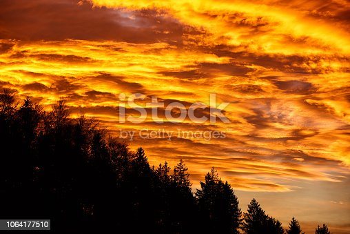 1013154212istockphoto forest landscape in sunset time 1064177510