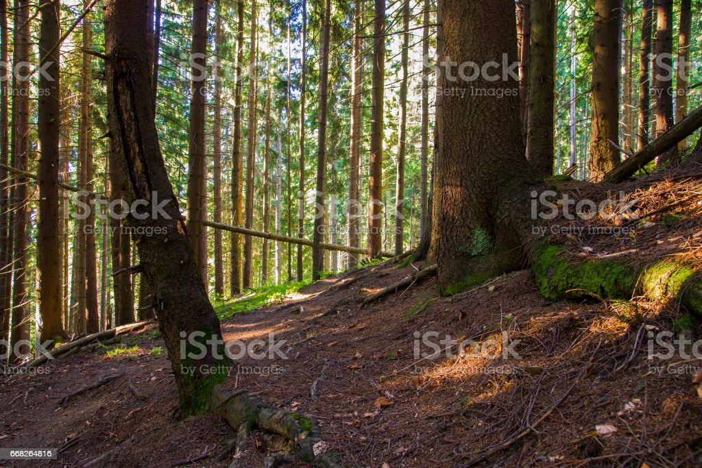 forest landscape in the morning foto stock royalty-free