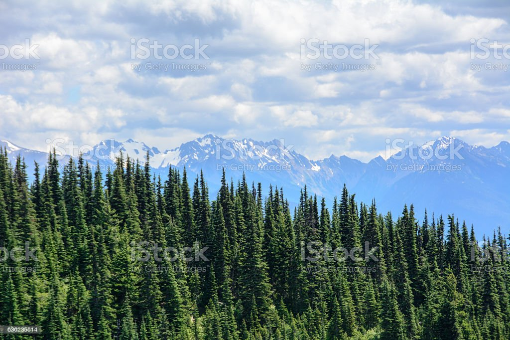Forest landscape in the mountains, Olympic National Park, Washington, USA stock photo