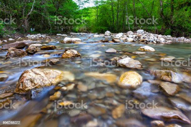 Photo of Forest landscape in the vicinity of Sochi, Russia.