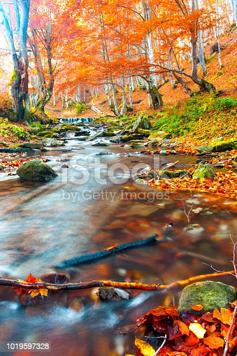 Stream in autumn forest. Forest landscape. Wood with red leaves. Fall nature.