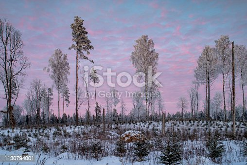1141614053 istock photo forest landscape 1130794001