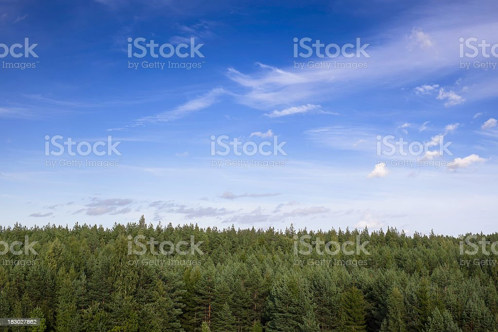Forest landscape stock photo