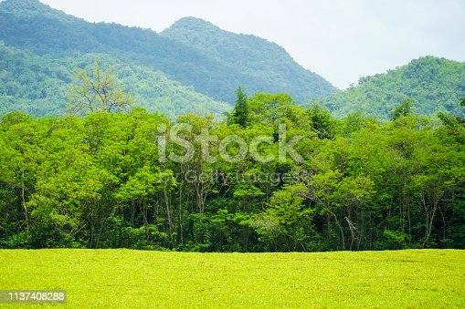 forest landscape view of mountain under sunlight nature background.
