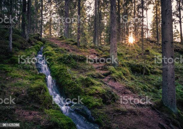 Photo of Forest landscape with idyllic stream and path at evening light in National Park Finland.