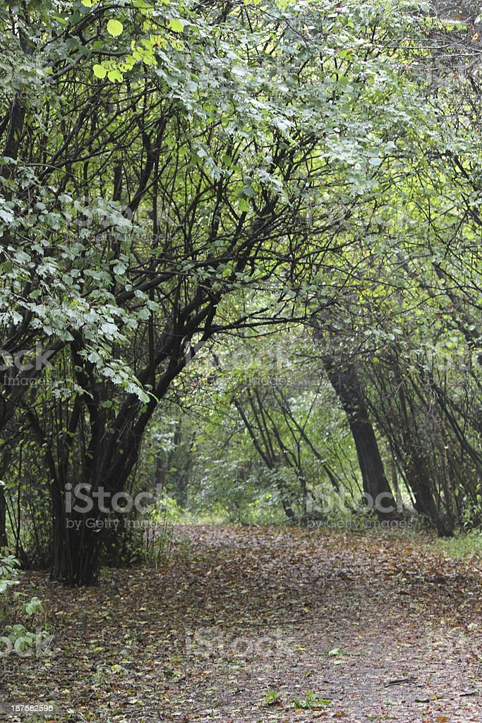 Forest Lane in autumn stock photo