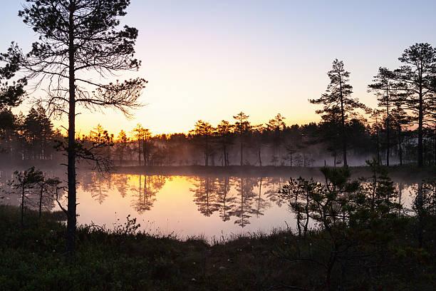forest lane in sunrice - pine forest sweden bildbanksfoton och bilder