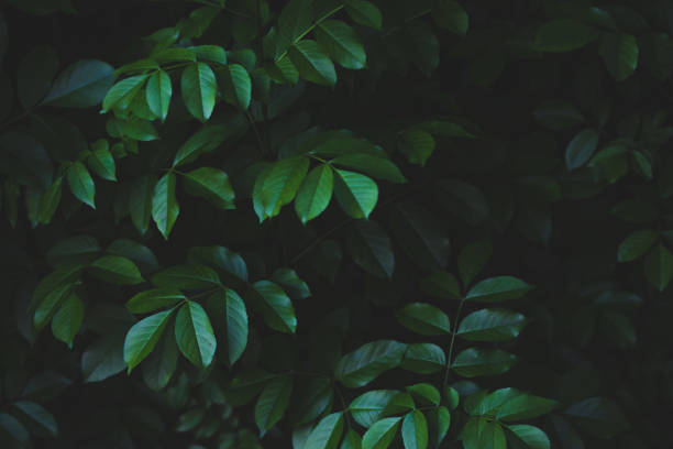 Forest leaves background stock photo