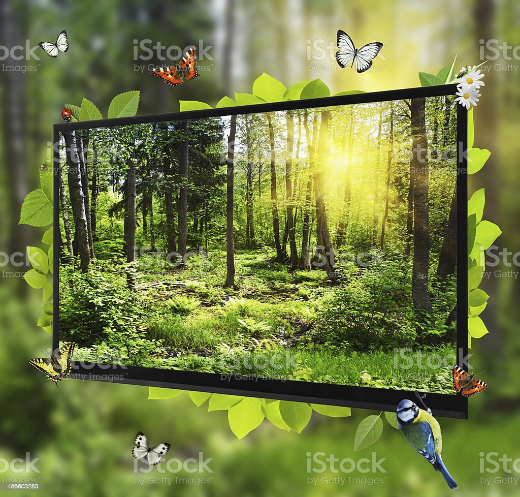Wald Leben zeigt auf dem Bildschirm – Foto