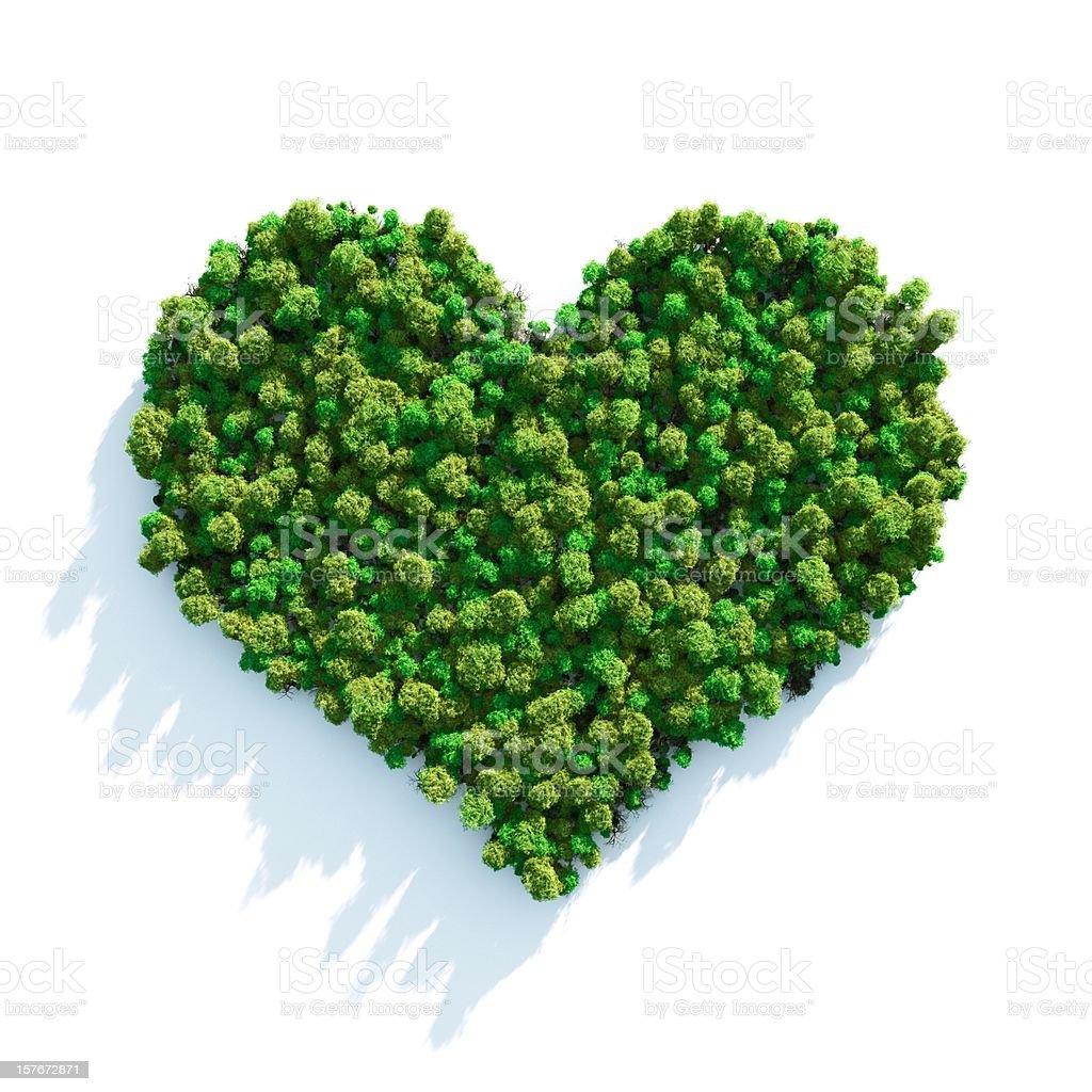 Forest lieben – Foto