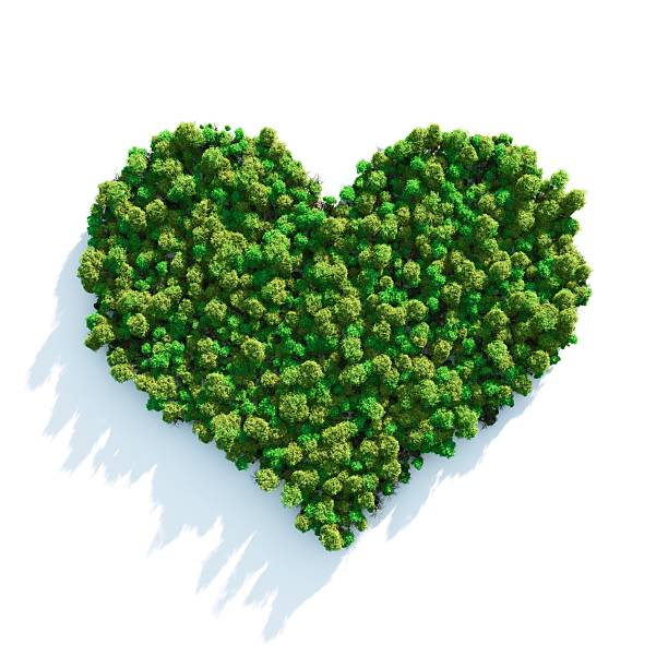 forest love - recycling heart bildbanksfoton och bilder