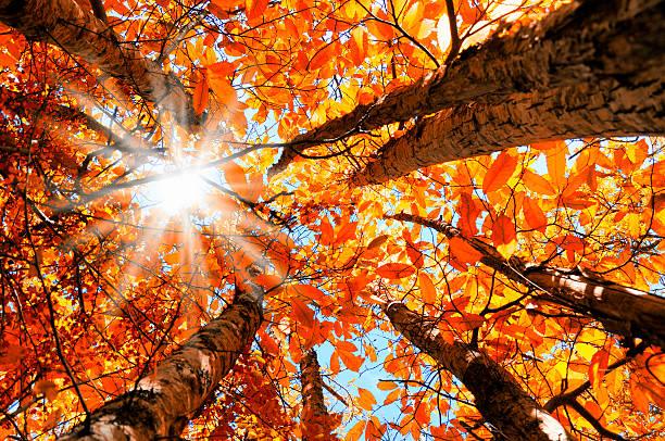 Wald-Flachwinkelansicht – Foto