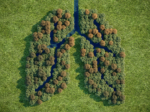 Forest in shape of lung, (3d render)