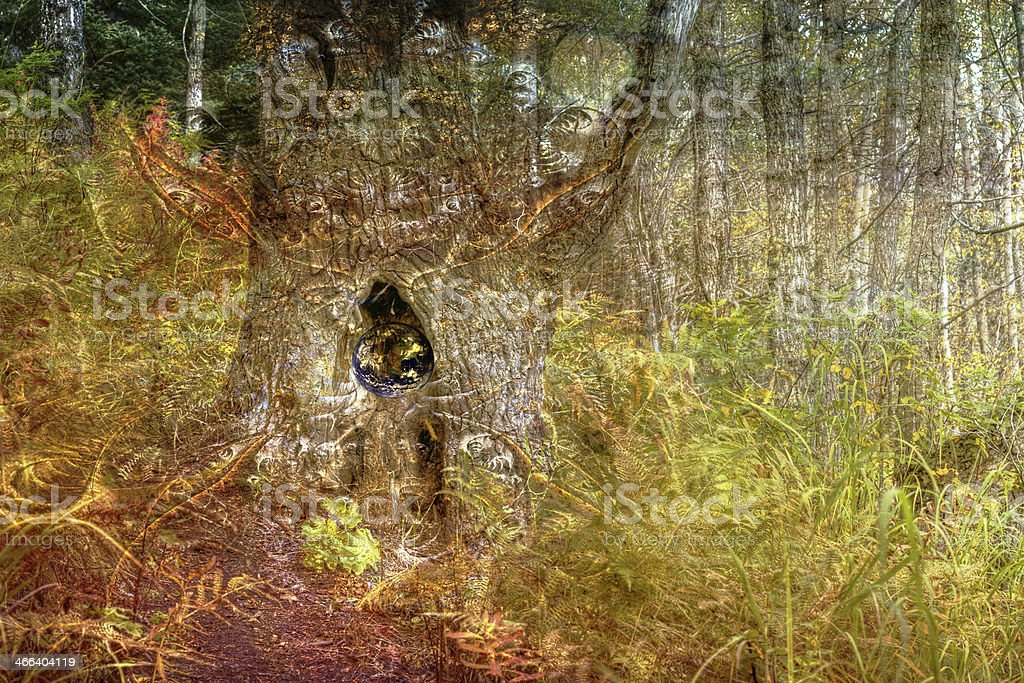 Forest Magic royalty-free stock photo