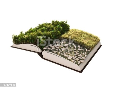 istock Forest Management Story 157607845