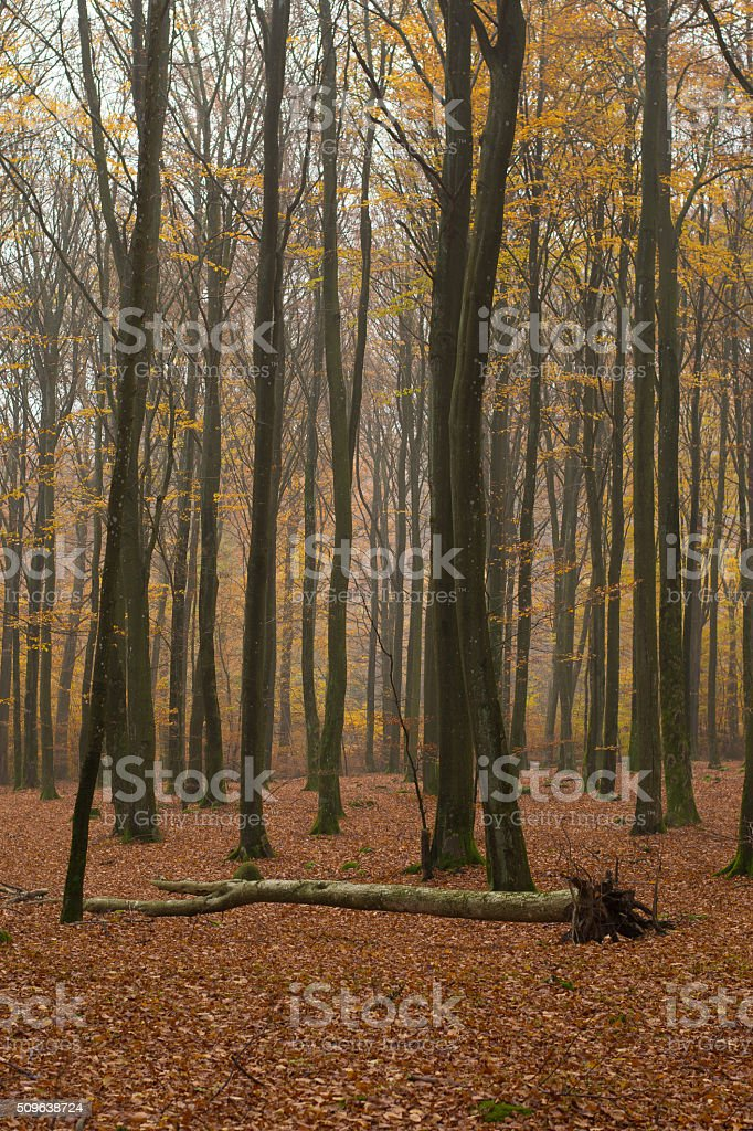 Forest Mist stock photo