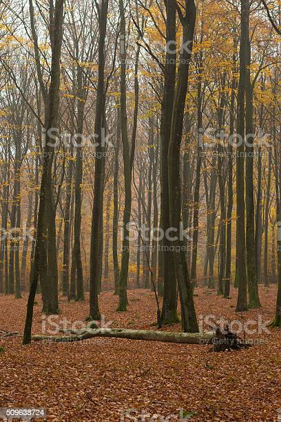 Forest Mist Stock Photo - Download Image Now