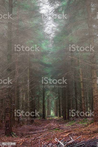 Photo of forest misty