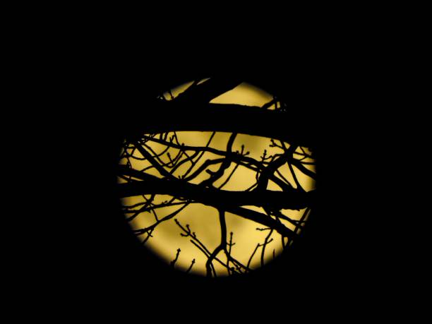 Forest Moon stock photo