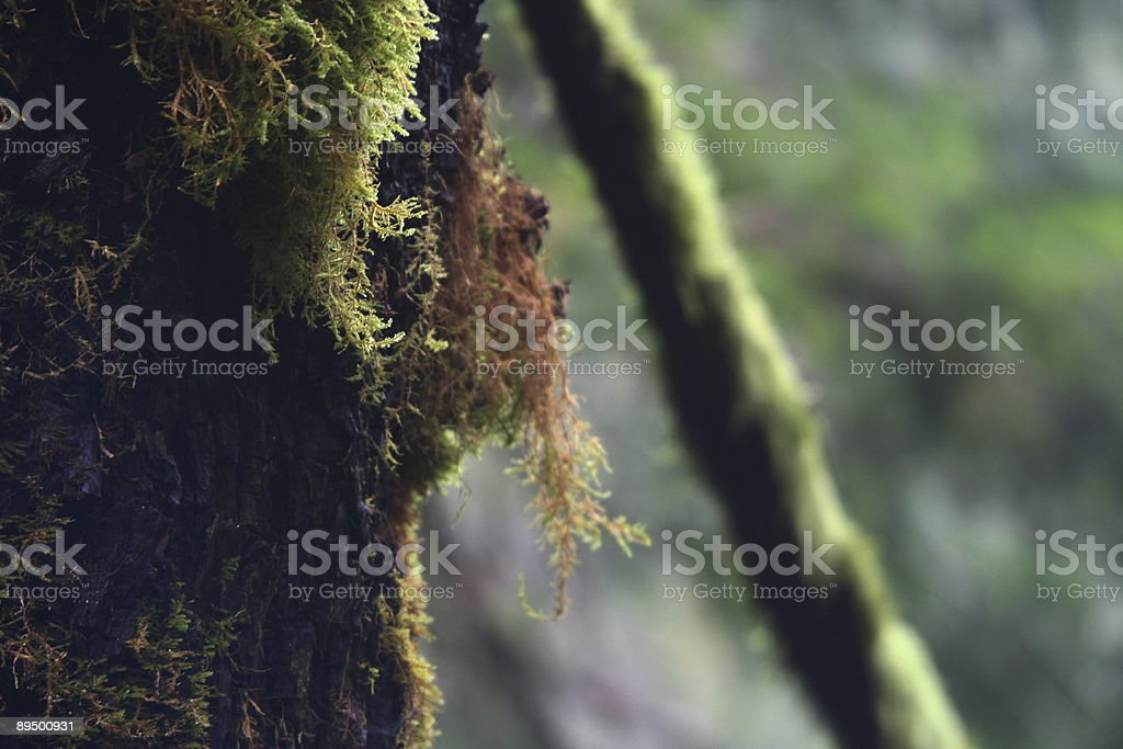 Forest Moss royalty free stockfoto